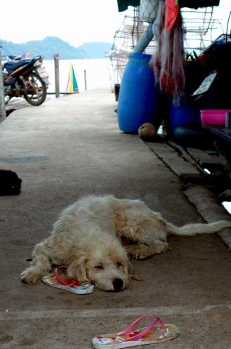 Slow life in Salak Phet