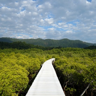 Mangrove forest boardwalk