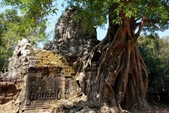 Masstive trees of Ta Som