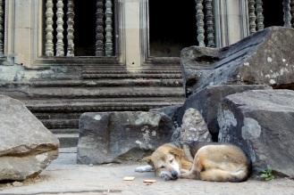 Sleeping dog inside the walls of Angkor Wat