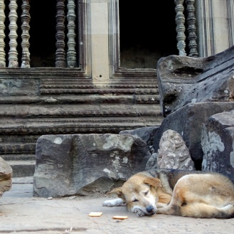 Sleeping dog inside the walls of Angkor Wat