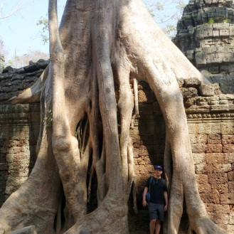 One of the many massive trees overtaking the ruins at Ta Prohm