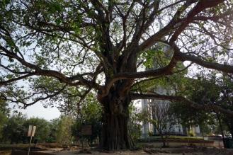 The Killing Tree at Choeung Ek