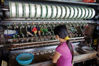 Silk factory. Unravelling the silk work cocoons to get rolls of silk thread.