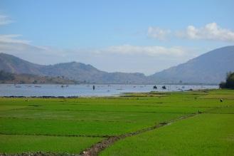 Lak lake rice paddies, elephants in the distance