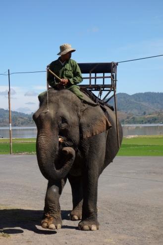 Elephant is back