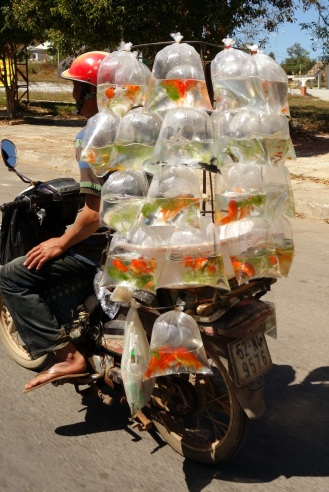 Motorcycle goldfish delivery.