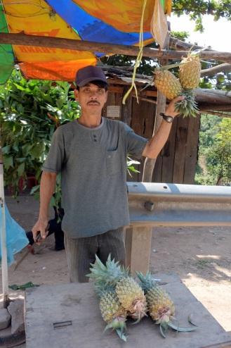 Roadside stop at pineapple farm.