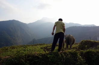 Man plowin his field with water buffalo