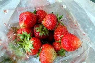 Strawberries on Samoeng loop.