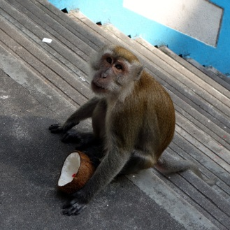 One of many Batu Caves monkeys