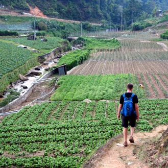 Finally exiting from the jungle into some farmers' fields