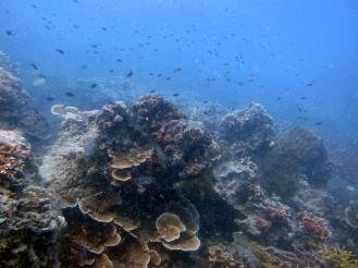 More underwater views