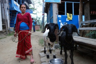 Lady with goats in Bahundanda, where we spent our first night.