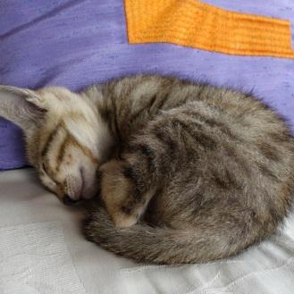 Newborn kitten...