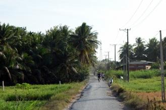 Nice rural scenes